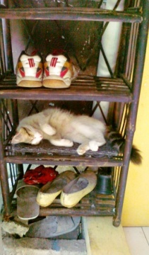 cat in the shoe rack