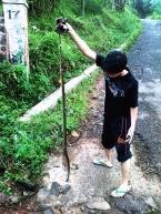 dead snake