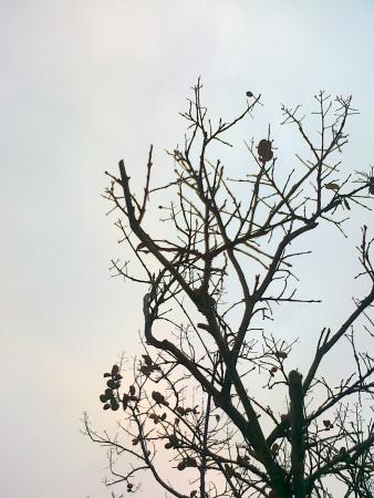 Pohon yang meranggas karena musim gugur, pemandangan yang indah dan sendu