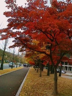 Warna pohon di Korea waktu musin gugur tiba