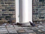 Waktu lagi asik memotret pemandangan di sekitar komplek Culinary School of Korea, entah kenapa tiba-tiba ada burung dara yang datang, sungguh random.